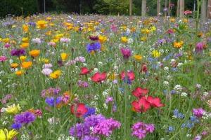 flower-meadow-368401_960_720