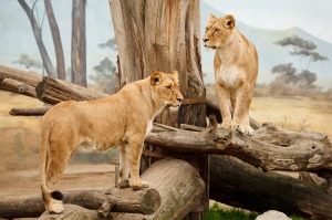 two-lions-11294081557s8m